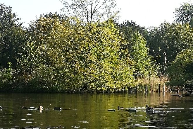 a flock of ducks floating on top of a lake surrounded by trees