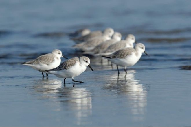 a flock of seagulls standing next to a body of water