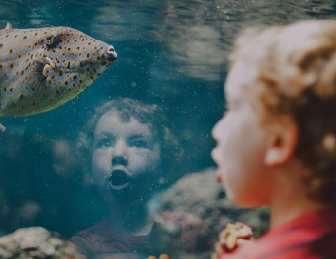 a boy looking at a fish in a fish tank